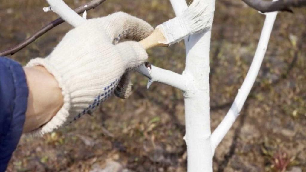 защита стволов плодовых деревьев зимой