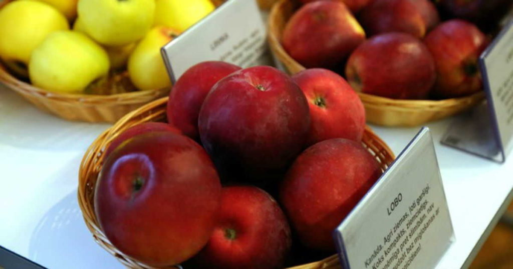 зимние сорта яблок описание
