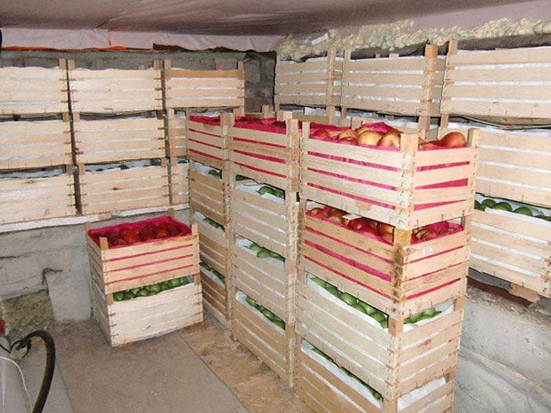 хранение яблок +на зиму