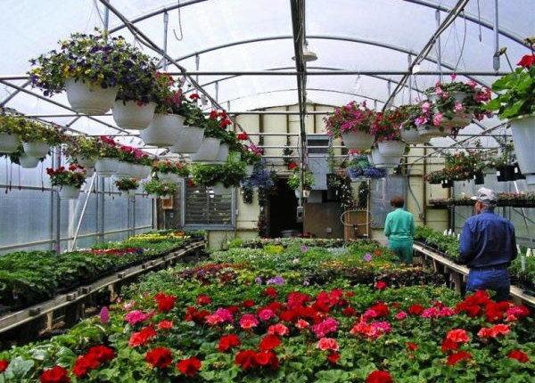 уход +и выращивание растений