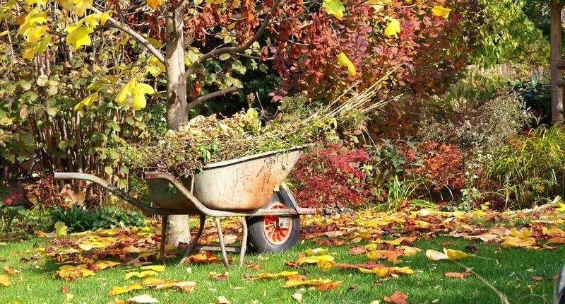 Подготовьте свой сад к зиме