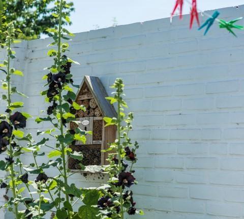 стена в саду
