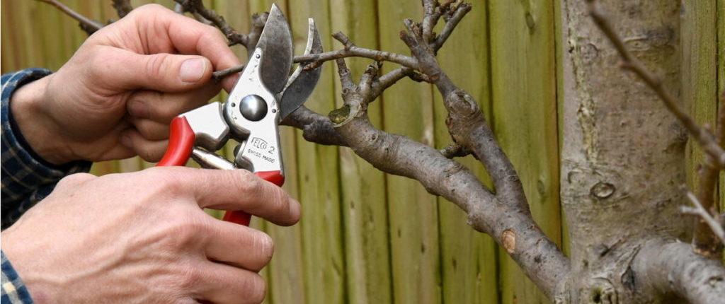 обрезки яблонь весной